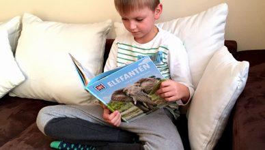 """Der Junge liest das Buch """"Elefanten"""""""