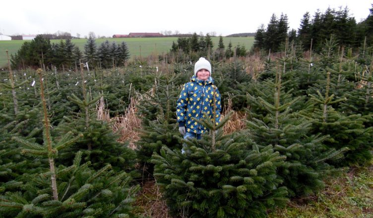 Weihnachtsbaum Selber Fällen.Den Eigenen Weihnachtsbaum Selber Schlagen Ein Erlebnis Für Groß