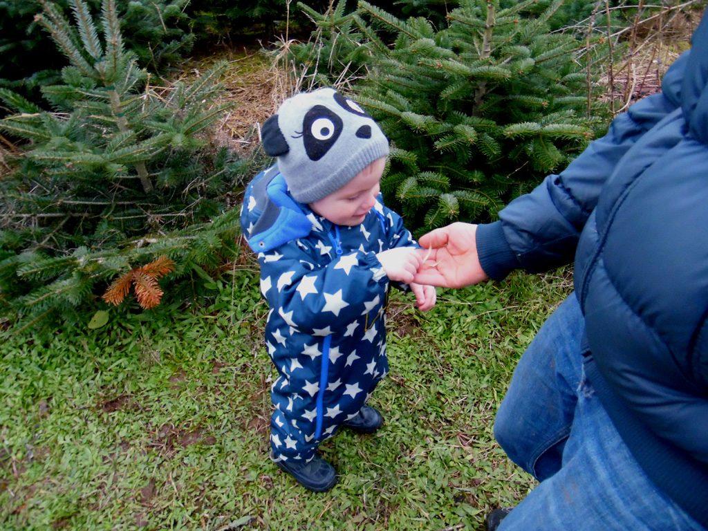 Der Junge gibt seinen Vater ein Stück der Baumkrone