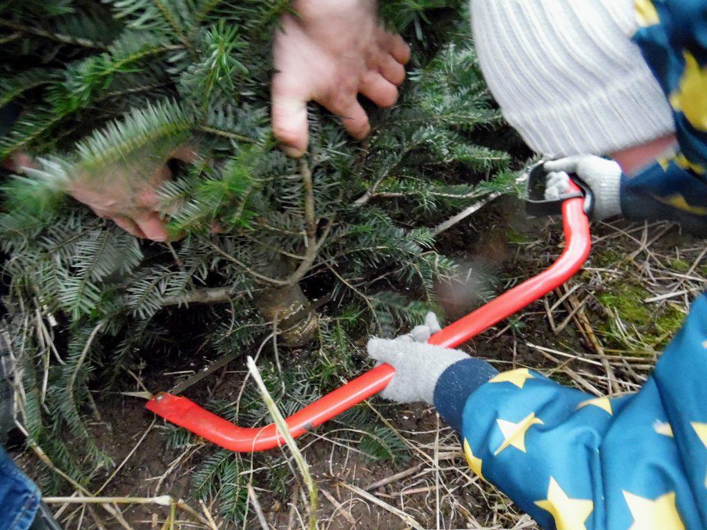 Der Junge schneidet den Baum