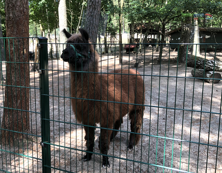 Geiselwind - Kinder-Zoo